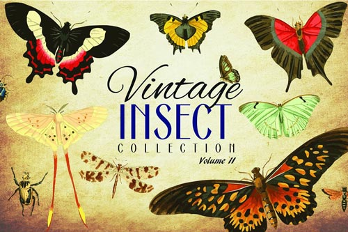 110-Vintage-Insect-Vector-Graphics-2.jpg