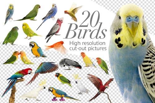 20-birds-jpg.1556