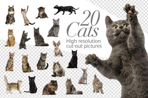 20-Cats.jpg