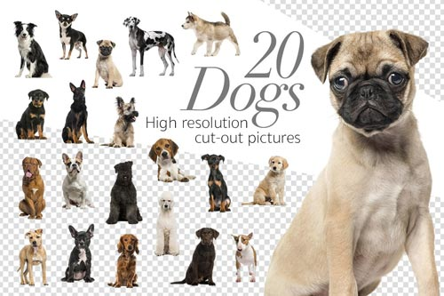 20-Dogs.jpg