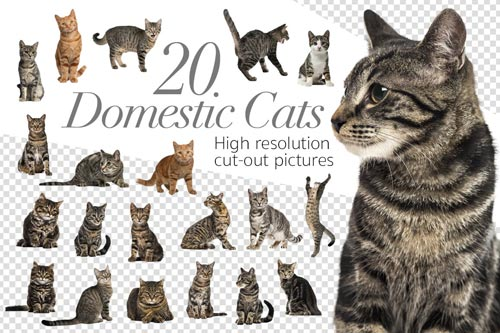 20-domestic-cats-jpg.1448