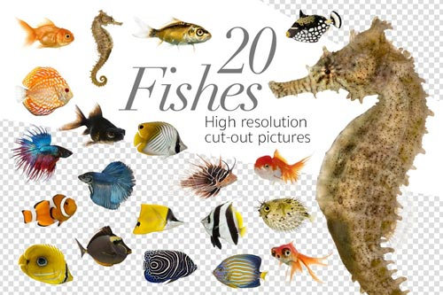 20-Fishes.jpg