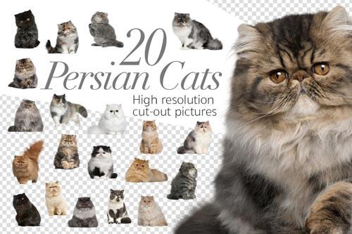 20-Persian-Cats.jpg