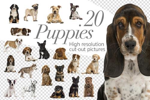 20-puppies-jpg.1442