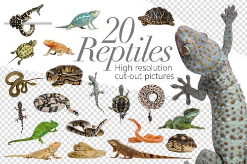 20-reptiles-jpg.1562