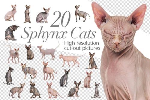20-sphynx-cats-jpg.1436