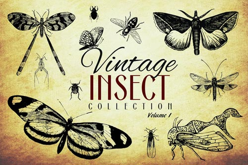 200-vintage-insect-vector-graphics-jpg.884
