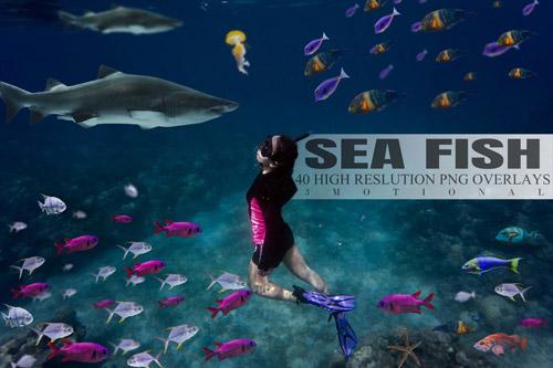40 Sea Fish.jpg