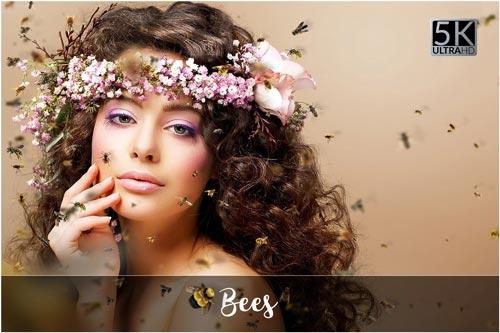 bees-jpg.4443
