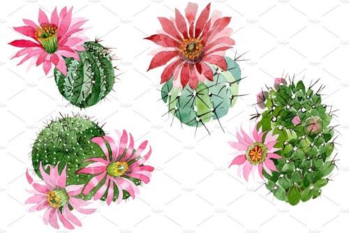 Cactus-green-spiny-ordinary.jpg