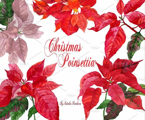 christmas-poinsettia-jpg.769
