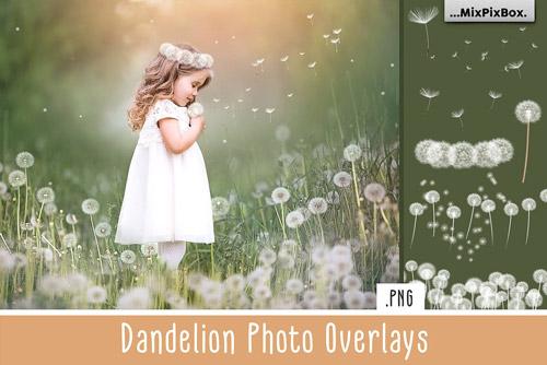 dandelion-jpg.8221