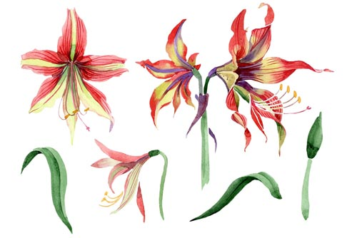 hippeastrum-red-and-yellow-flower-jpg.1150