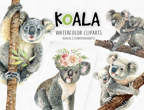 koala-jpg.2278