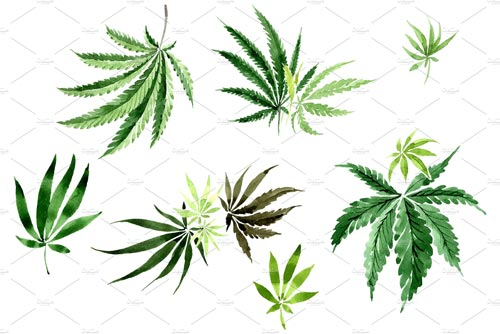 Leaves-hemp-plant-watercolor.jpg