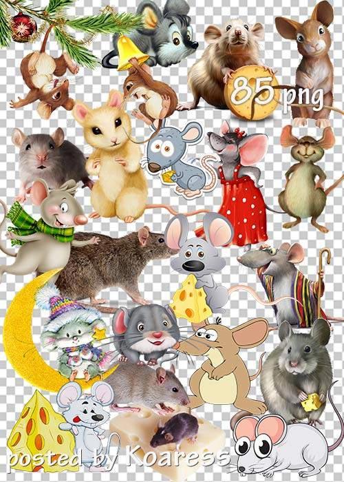 Mice-and-rats.jpg