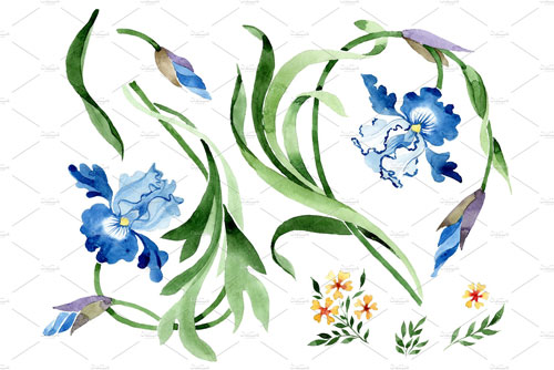 Ornament-with-irises-Watercolor-png.jpg