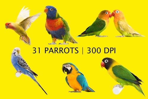 parrots-jpg.5322