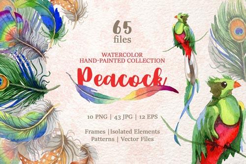 peacock-watercolor-jpg.2827
