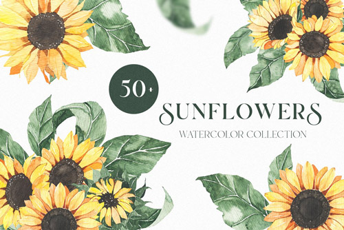 Sunflowers collection.jpg