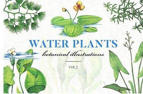 water-plants-jpg.179