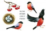 Bullfinch and Rowan clipart.jpg